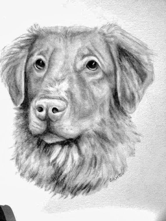 8x10 custom pencil portrait of your pet (FoE member)