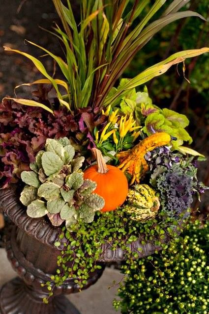 Fall flower arrangement nestle mini pumpkins gourds in potted plants design outside - Potted autumn flowers ...
