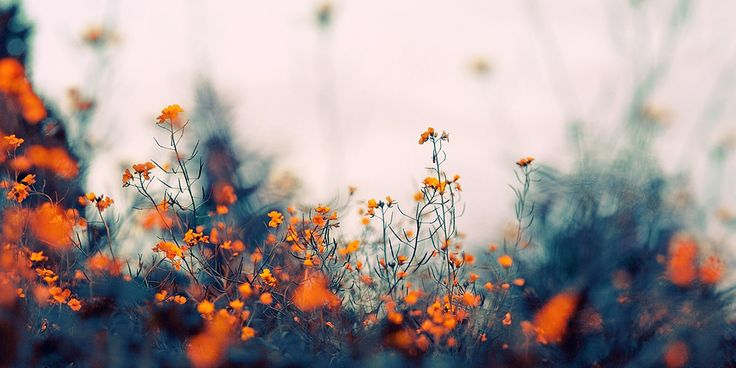 Cabecera otoño/primavera floral