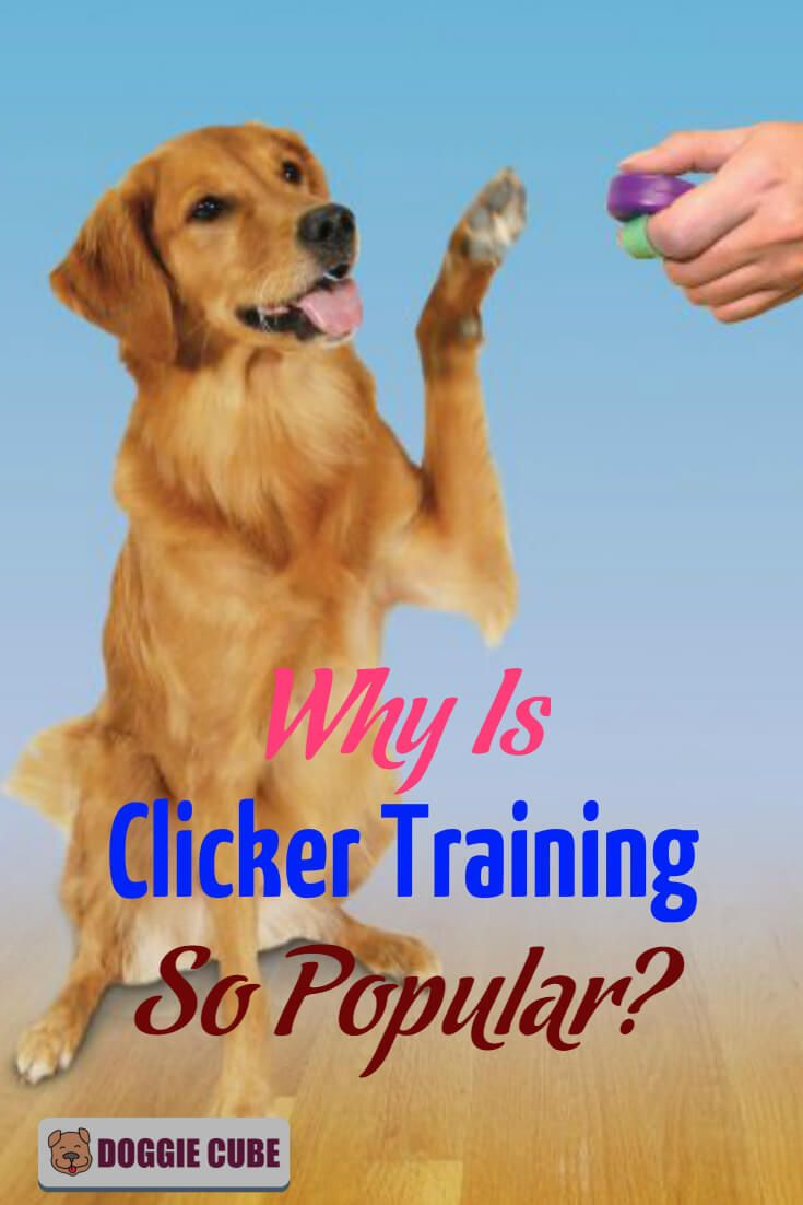 Why Clicker Training Is So Popular In Dog Training Dog Clicker