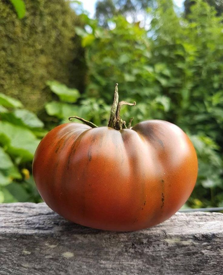 Excited to share the latest addition to my #etsy shop: Black Krim Tomato (aka Black Crimson), Organic Heirloom Tomato Seeds - Non-GMO, Open Pollinated, Untreated, Black Crimea Tomato Plant Seeds http://etsy.me/2DEllM8 #supplies #seeds #garden #heirloom #growyourown #ga