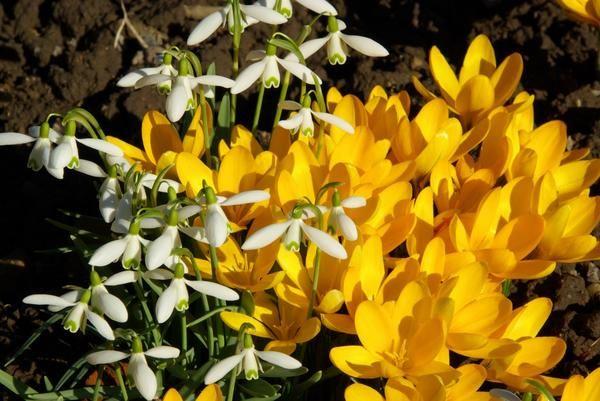 садовые цветы: 10 САМЫХ РАННИХ ЦВЕТОВ ДЛЯ ВАШЕГО САДА