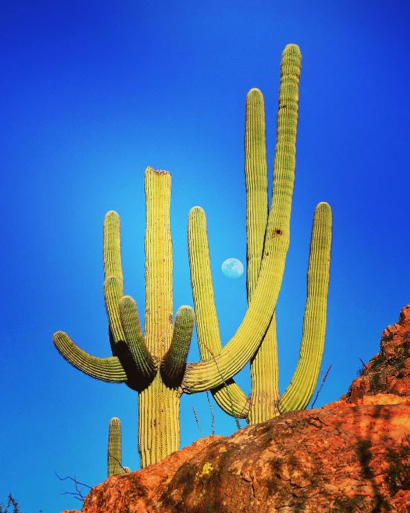 105 best hike tucson arizona images on tucson