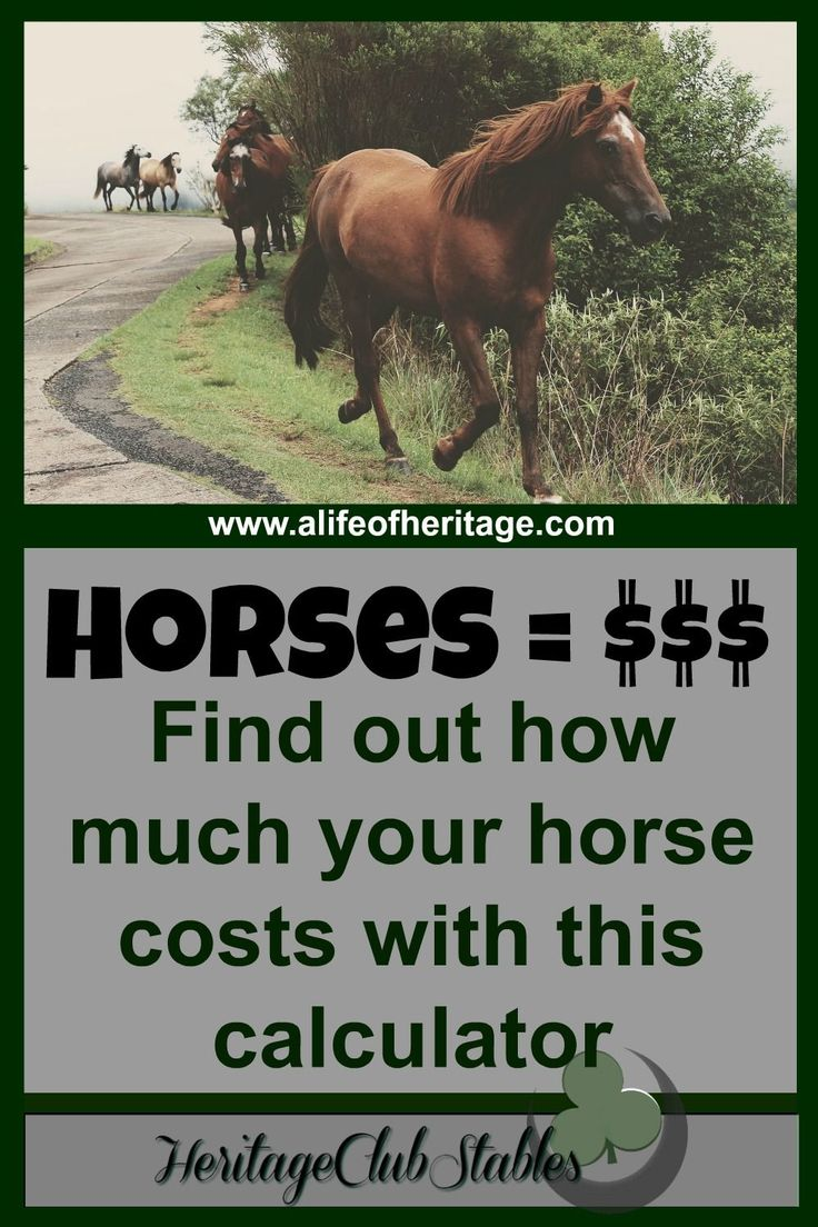 What does a horse really cost? Please utilize the FREE Horse Cost Calculator provided. Take a look at what owning a horse would really cost you