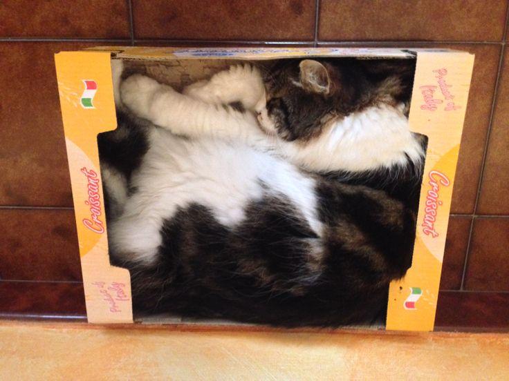 Thor nella sua scatola preferita!!!