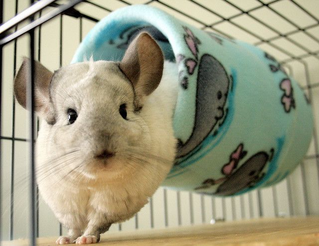fleece tube for chinchillas. One of my favourite pet craft projects!