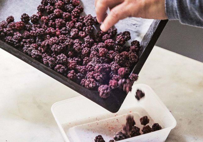 SINGELFRYSING: Hvis du kun er opptatt av konservering, er det ingen teknikker som kan konkurrere med frysing, mener Sverre Sætre. Foto: Lars Petter Pettersen/boken «Frukt og bær»