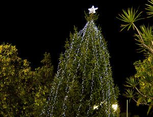 There are very few Christmas tree in Spain that consists of true fir. But the Christmas tree in Torrevieja on the Costa Blanca is a shining exception, it is from Sweden.