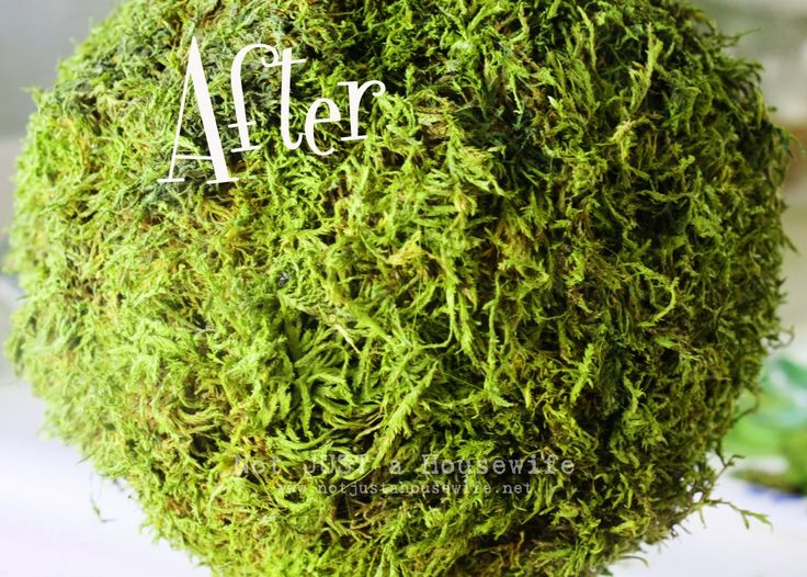 Freshen Up Your Moss!!!