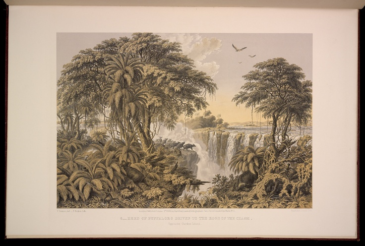 Plate 6: Herd of Buffaloes Driven to the Edge of the Chasm, Opposite Garden Island.