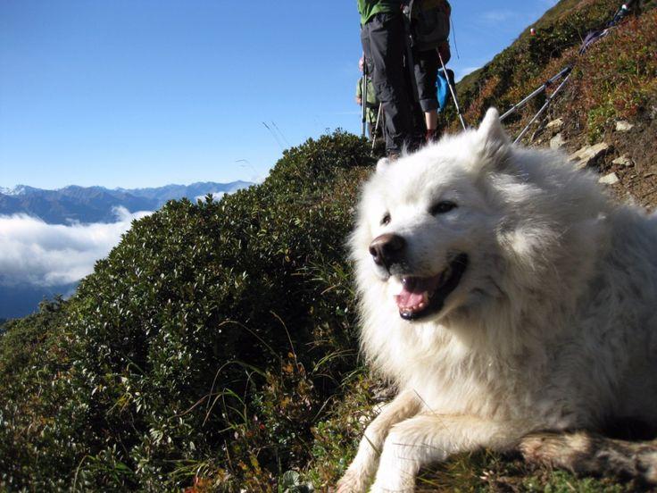 Tierischer Urlaub im Lechtal - Tirol - Österreich - Wandern mit Hund (c) Gasthof Bären #urlaubmithund #hunde #wandernmithund #wandern #österreich #tirol #lechtal #austria #tierischehotels #tierischerurlaub