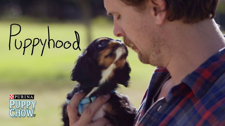 Puppyhood: Our First Puppy Poop | Purina® Puppy Chow® - YouTube