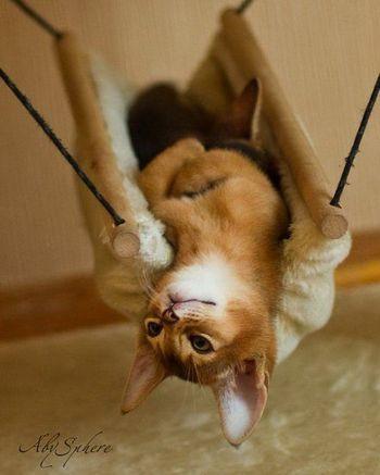 すっぽり体にフィット。母猫に包まれているような気持ちになるのかもしれません。