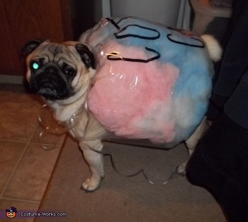 58 best pug costumes hahaha images on pinterest doggies pug cotton candy pug halloween costume contest at costume works solutioingenieria Choice Image