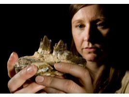 Meredith Rivin is associate curator of paleontology at the John D. Cooper Center for Archaeology and Paleontology.