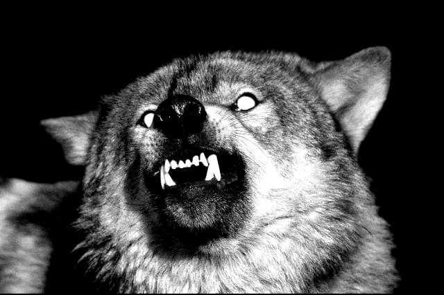 Angry Wolf Tumblr