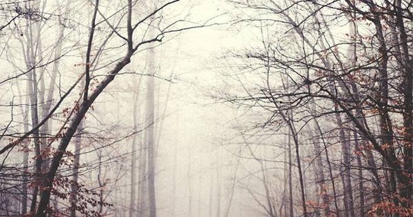 Just Pinned to Forests2: I found myself possessed by an insatiable desire to wander my feet pressing forward despite my body's insistence that rest was required. That is how I found myself alone in the wood pressed in by the copse of trees and heavy blanket of fog. That is how I found myself quite lost indeed... http://ift.tt/2qPx8xd