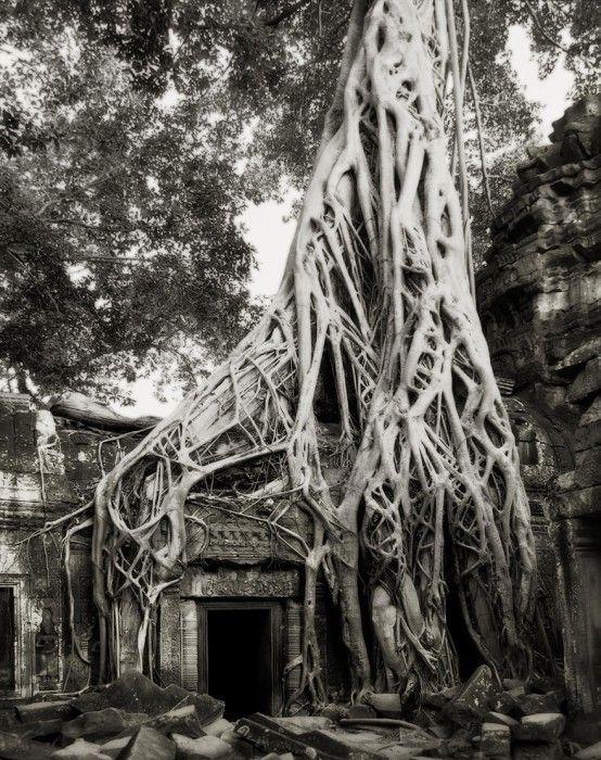 staroveke-stromy4