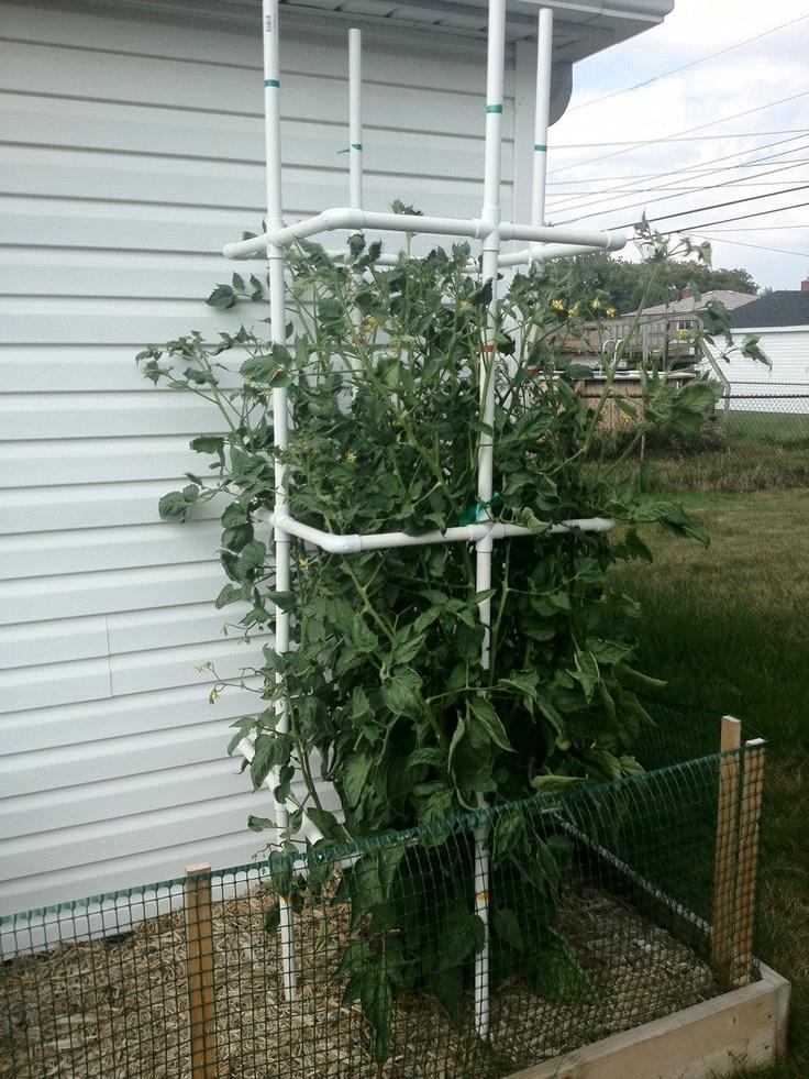 tomato cage using PVC piping | pvc | Pinterest | Tomato ...