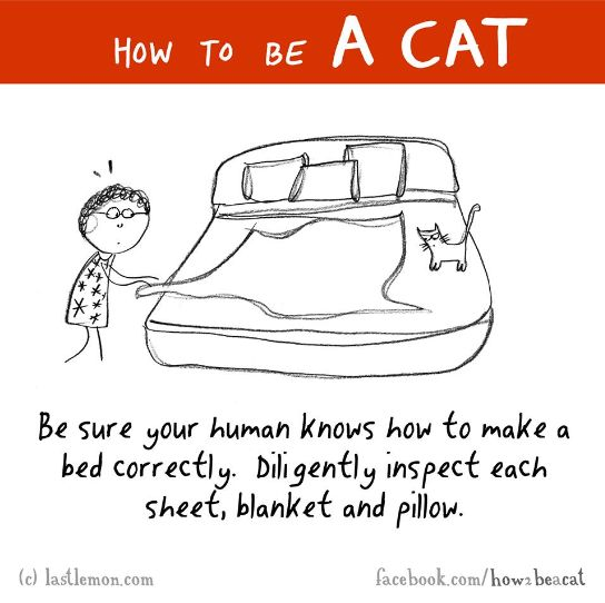 1000 Images About Funny How To Be A Cat On Pinterest