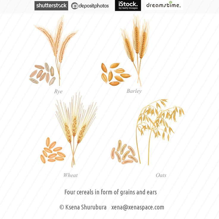 Four cereals in form of grains and ears by Ksena-Shu