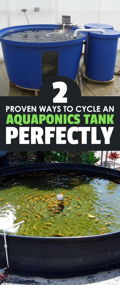 2 proven ways to cycle an aquaponics tank perfectly for Cycling a fish tank