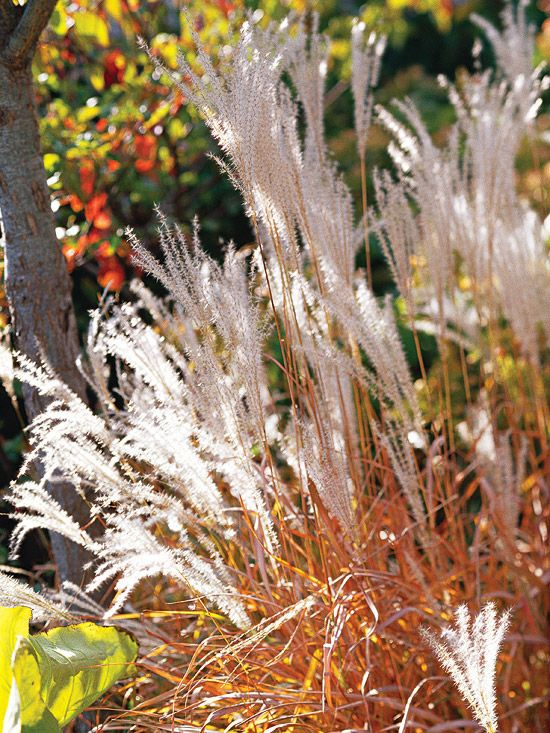 15 Ways To Use Ornamental Grasses In Your Landscape Gardening