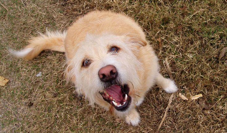 犬のことわざ故事成語弱い犬はすぐ吠える吠える犬は嫌われる