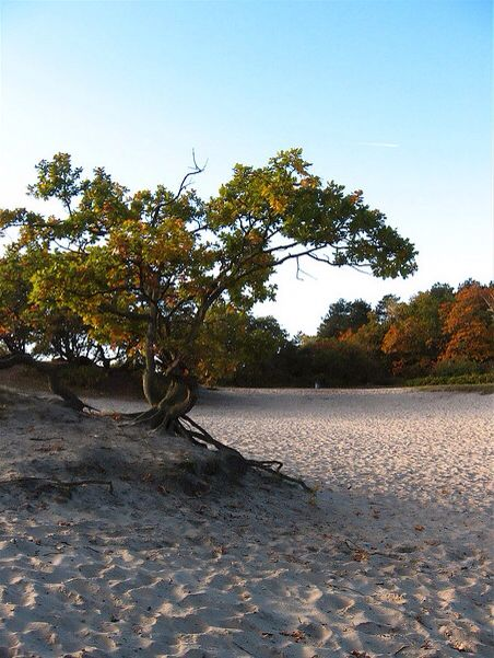 Hoge Veluwe, National park Gelderland