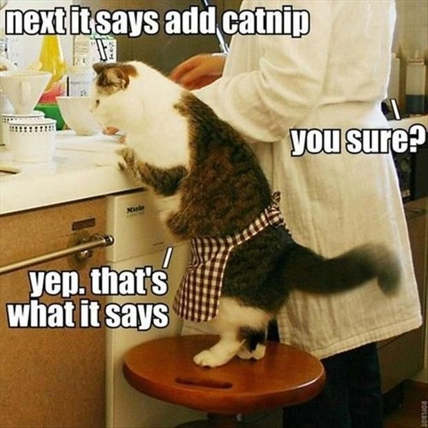cooking with your cat
