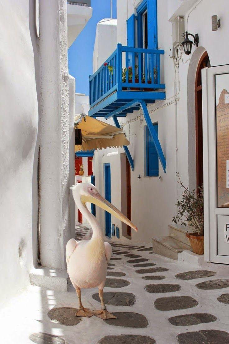 #ILoveGreece #JOHNNY #Greece #islands #mikonos #aegeansea