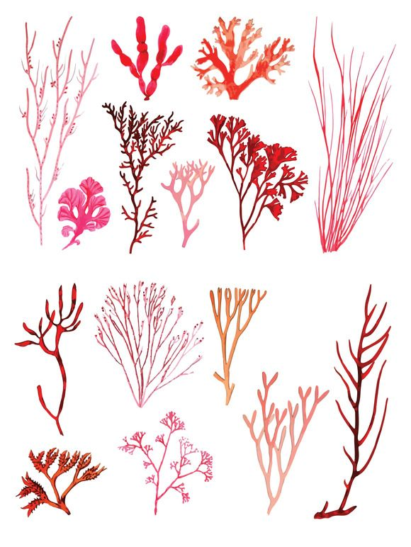 Vector Coral Illustration Pack by @Graphicsauthor