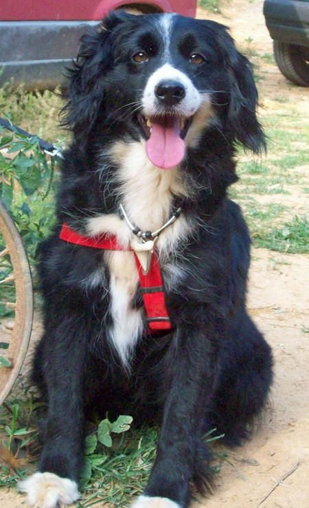 Border Collie mix. If I lived on a farm I would SO have one of these dogs!