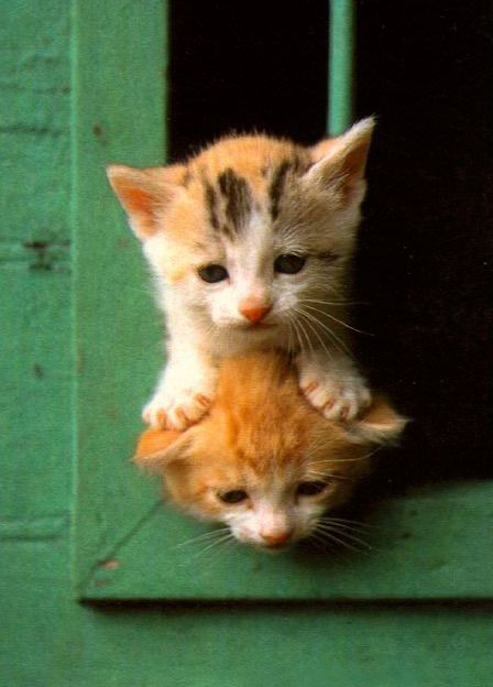 "* * ORANGE KITTEN: "" It be actually verys difficults to makes somethin' simple…"