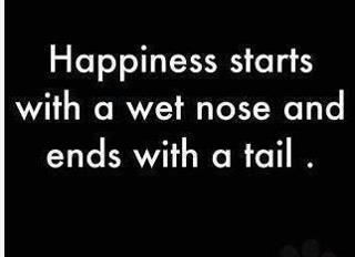 La felicidad empieza con una nariz humeda y termina con una cola.