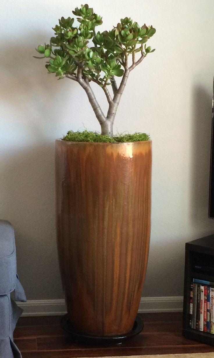 15 best jade plant images on Pinterest | Jade plants, Crassula ovata ...