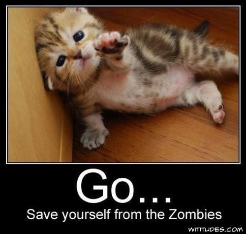 OMG! This is just too CUTE!!! ;D: Zombies Apocalypse, Cat, Walks Dead, Baby Animal, Funny Stuff, Left Behind, Kittens, Weights Loss, Kitty