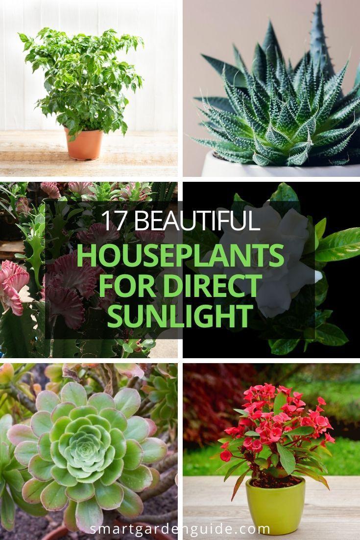28 Perfect Houseplants For Direct Sunlight - Smart Garden ...