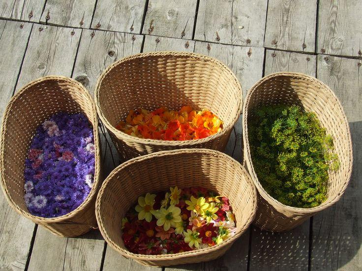 Raccolto di Fiordalisi, Dalie, fiori di Nastuzio, di Aneto - Cornflowers, Dahlias, Dill and Nasturtium http://fattoriadelleerbe.it/