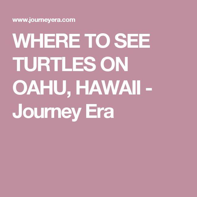 WHERE TO SEE TURTLES ON OAHU, HAWAII - Journey Era