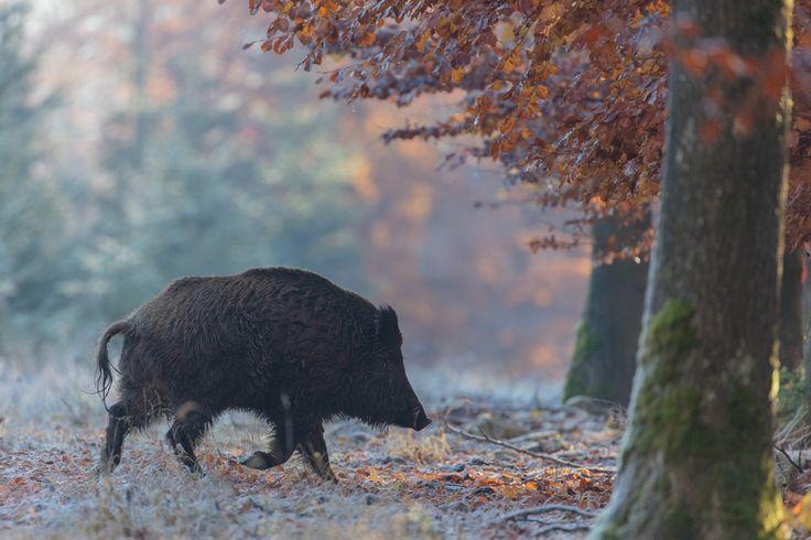Novembermorgen...+http://fc-foto.de/37095977