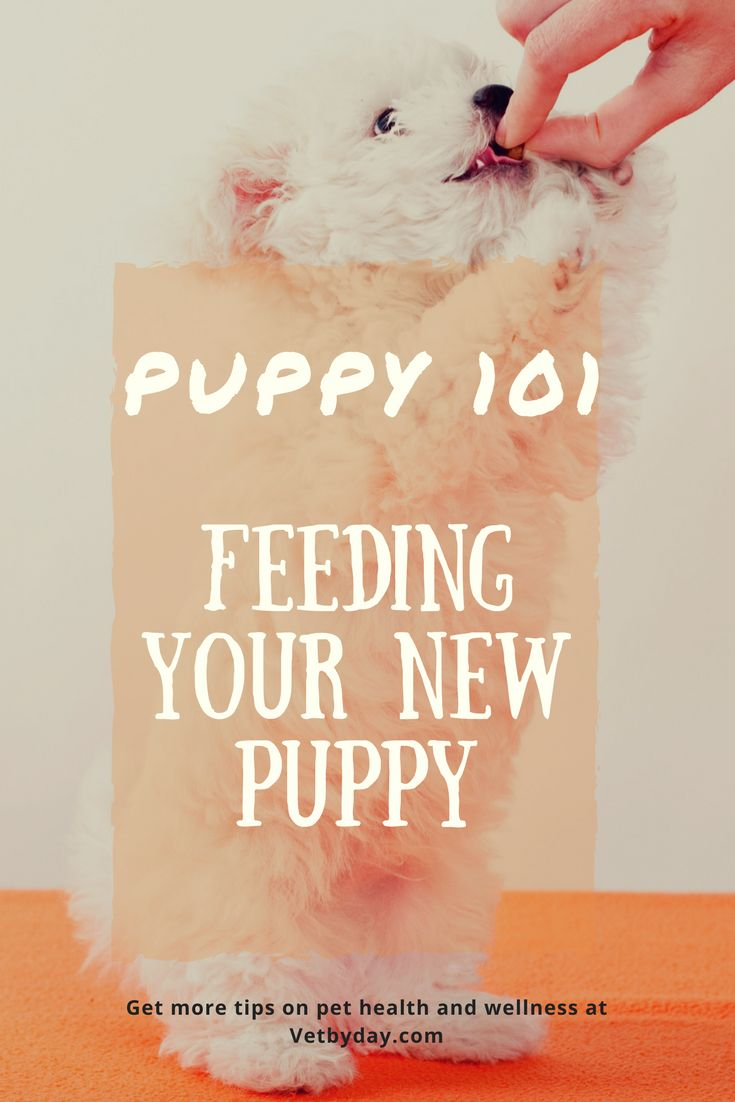 """PUPPY 101 Aaah! Sweet sweet puppies! They play with gusto, sleep with rapture and just make any gloomy day so much better. A new puppy brings so much joy and excitement to your life: whether you're newly married, divorced, single, have kids, no kids or retired, a dog is a true companion for any life…  Continue reading """"PUPPY 101 Part 1: Feeding your new puppy"""""""