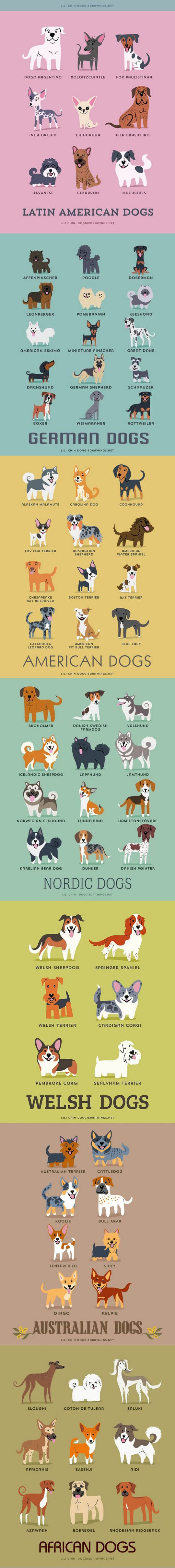 Dog Breeds. I Love Them All! Part 3   #Animals #Breed #Dogs #World