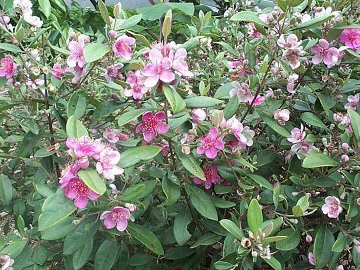 Mukurthi National Park in Tamil Nadu, India Flowering