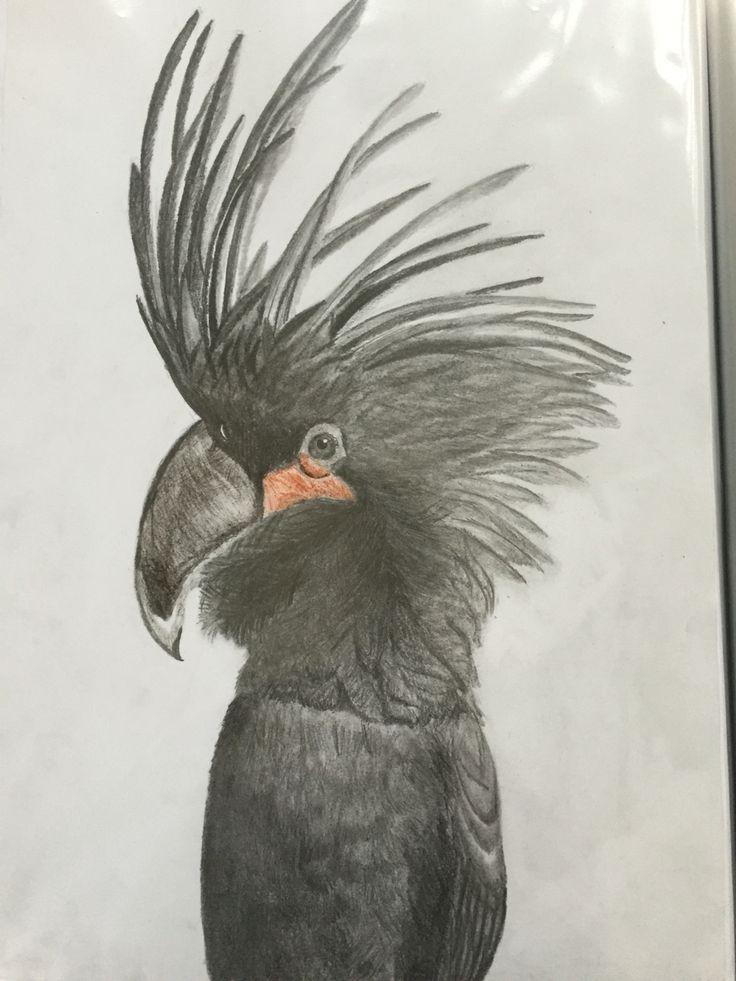 The Palm Cockatoo