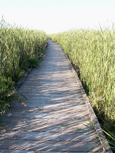 Point Pelee National Park - Boardwalk Leamington, Ontario, Canada
