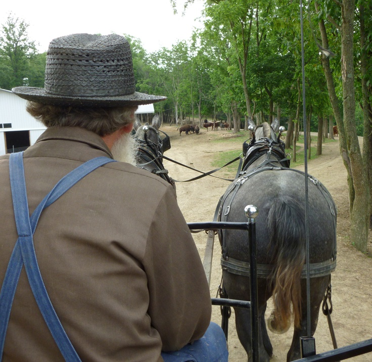 71 best things to do in amish country images on pinterest for Amish country things to do