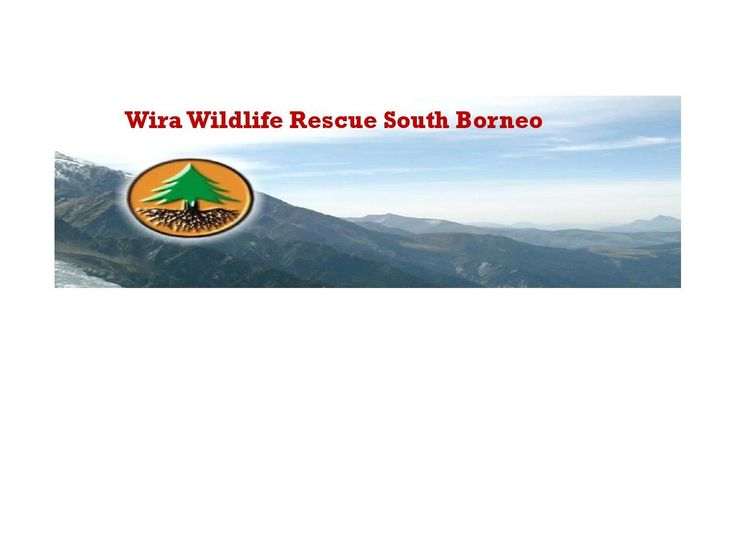 #ClippedOnIssuu from Wira Wildlife Rescue South Borneo