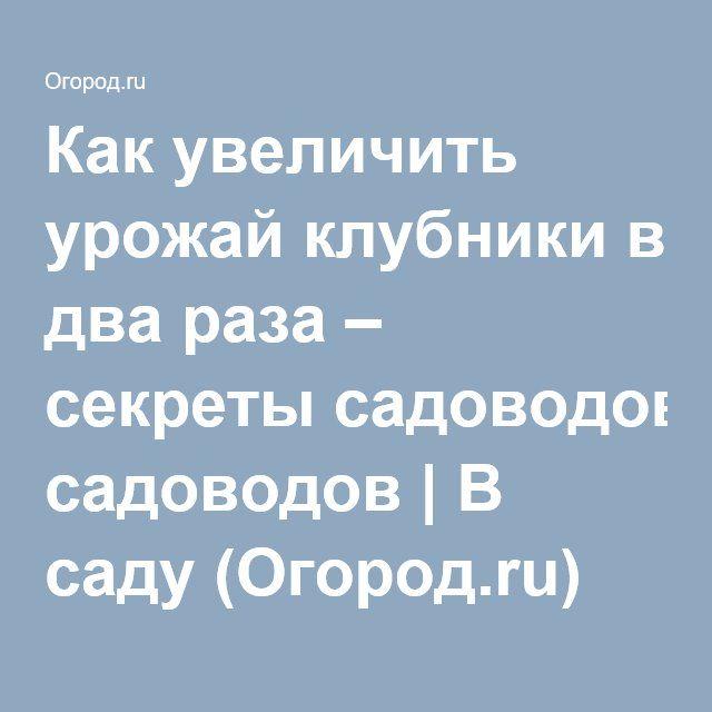 Как увеличить урожай клубники в два раза – секреты садоводов | В саду (Огород.ru)