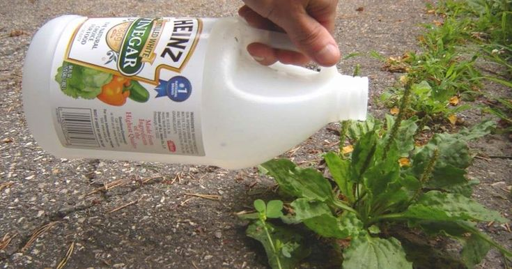 Weeds are a gardener's worst nightmare, so get rid of them with these natural solutions.